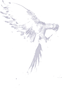 perch-bird